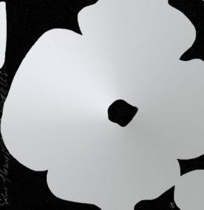 Blume weiß auf schwarzem Hintergrund